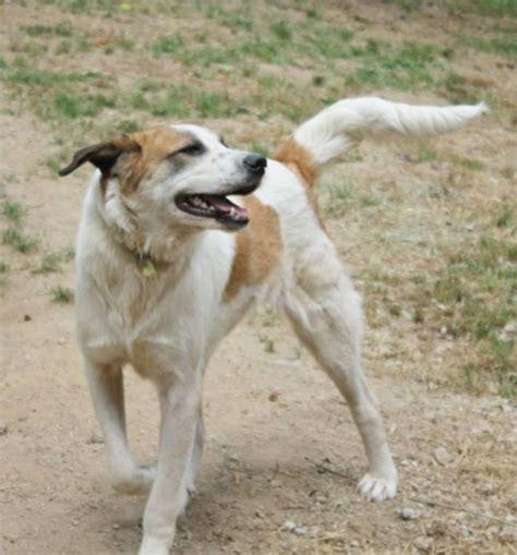 Street Dog Is Rescued, Undergoes Amazing Transformation