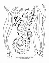 Seahorse Coloring Pages Seahorses Drawing Google Sea Horse Printable Adult Draw Butterfly Panda Quilling Theinkyoctopus Beach Starfish Tattoo Getdrawings Animals sketch template