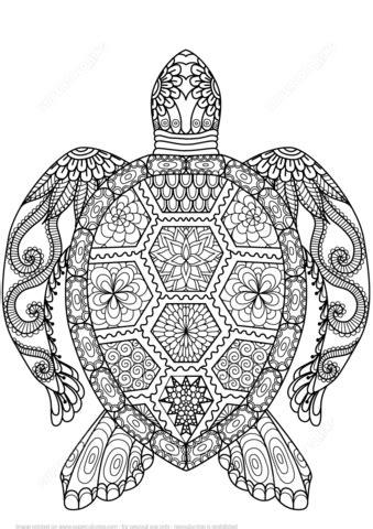 coloriage tortue en zentangle coloriages  imprimer