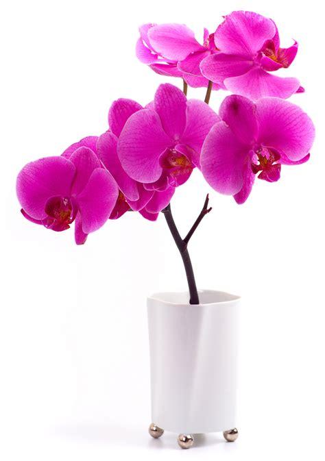 stickers fleur pot orchid 233 e pas cher
