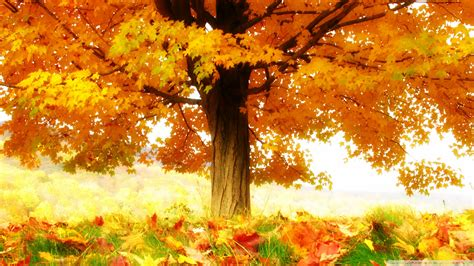 Autumn Wallpapers Hd by Autumn Wallpaper Hd Hd