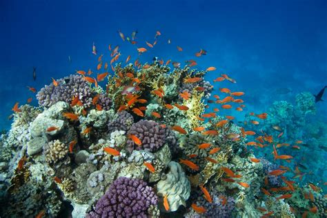 club de plong 233 e sous marine basse terre guadeloupe sarl archipel plong 201 e