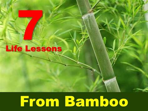 bamboo quotes image quotes  hippoquotescom