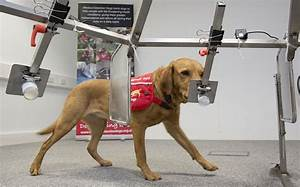 cancer detecting dogs research again supports canine ability to detect cancers