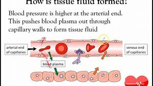 Bloody Vessels  Part 3   Tissue Fluid And Sphymo   What