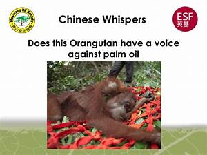 The Impacts Of Palm Oil Production