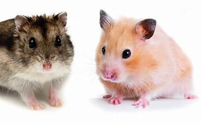 Hamster Raspberry Pi Dem Pedometer Aufbauen Ein