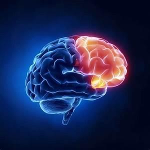 Brain Blood Flow Abnormalities  U2013 Gluten Free Works  Health