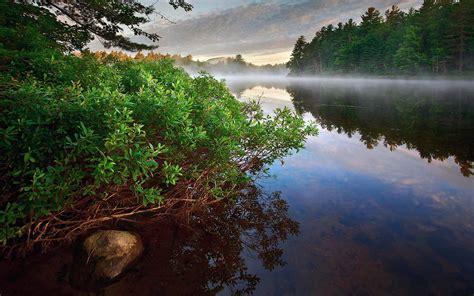 Deep Forest Wallpaper River Hd Desktop Wallpapers 4k Hd