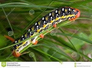 Colorful Caterpillar Against Green Background Royalty Free ...