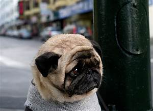 File:Mr Newman - the world's saddest dog (cropped).jpg ...