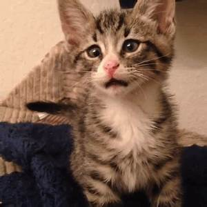 Kitten Born With Permanently Worried-Looking Eyes | The ...