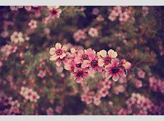Floral Tumblr Wallpaper