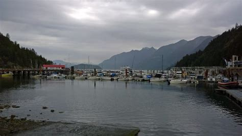 Sewells Boat Rentals by Speed Boats In Horseshoe Bay Of West Vancouver