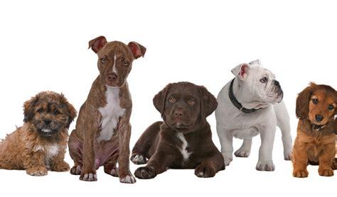 dog breed quiz    choose   pup top