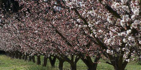 Chambre D Agriculture Du Roussillon Abricots Rouges Du Roussillon En Route Vers L Aop L