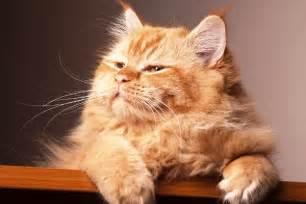 happy cat 6 ways to make your cat happy catster