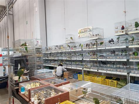 Kleintiermarkt Und Börsen Termine