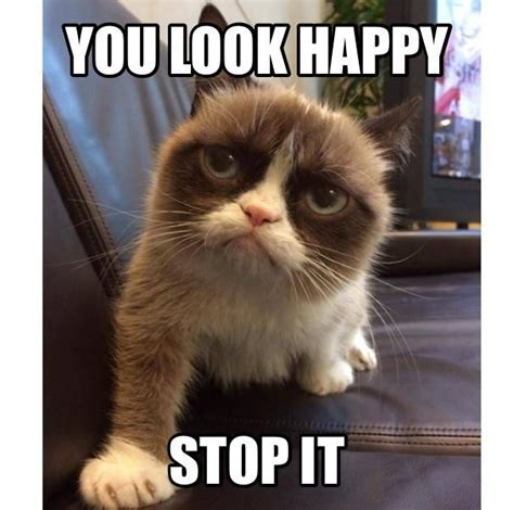 Kitty Meme - https www facebook com photo php fbid 925046600843431 funny cat pics pinterest grumpy