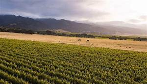 The Santa Lucia Highlands Ava Has Some Of The Most Famous