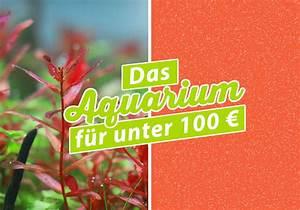 Schlafsofa Unter 100 : unter 100 euro top video wie gut sind smartphones unter euro sat with unter 100 euro coole ~ Indierocktalk.com Haus und Dekorationen