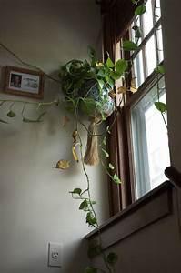 Plante D Intérieur : les plantes d 39 int rieur pour petits espaces marie claire ~ Dode.kayakingforconservation.com Idées de Décoration