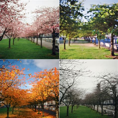 The Four Seasons Of The Sakura (a Year In The Making) Flickr