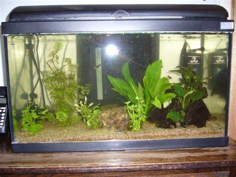 led pour aquarium aquarium 77 gal us par 28 images 25 best ideas about 29 gallon aquarium on plant fish tank