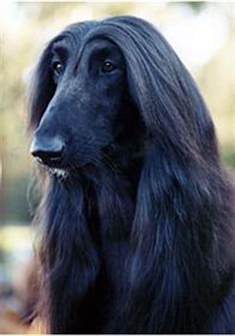 Australian Dog Breeds Gallery Dog Breeds Pedigree
