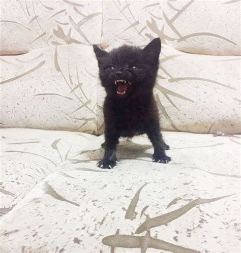 angry kittens  demand