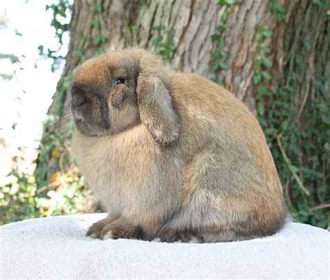 Rew Holland Lop Project