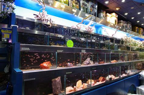 aquarium accessories shopping aquarium accessories shopping 28 images s aquatic design centre is an aquarium store that