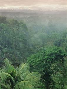» Costa Rican rain forest | NYBG