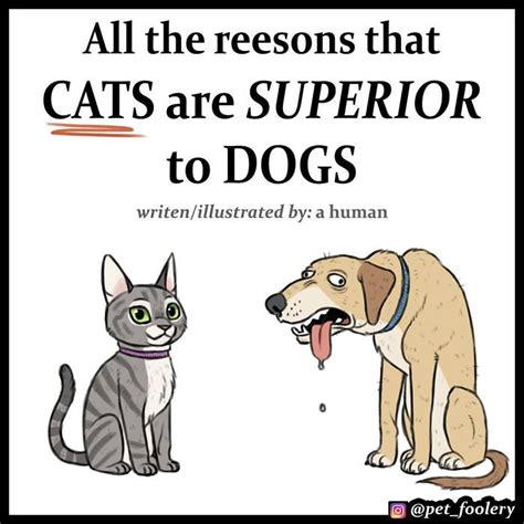 cats dogs better than why comics funny superior cat reasons pet hilarious foolery then explaining comic argument fact decided explain