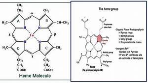 Haemoglobin Chemistry