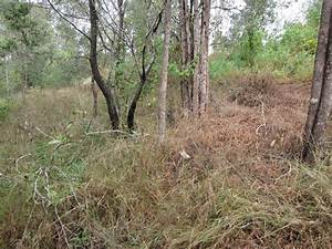 Property Profile: A Journey with Land for Wildlife, Gympie ...