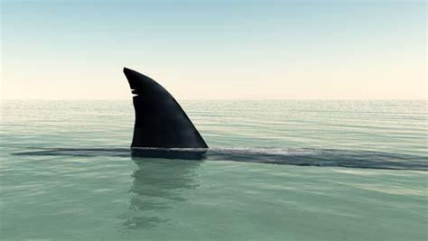 Should we be afraid of sharks in SF? - RENTCafé rental blog