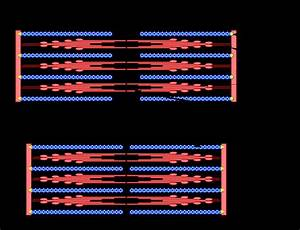 Sarcomere Diagram Labeled  U2014 Untpikapps