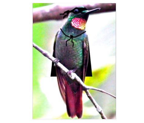 why do hummingbirds fight 28 images hummingbirds