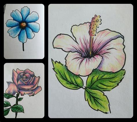 Dessin Fleur D'hibiscus Couleur  Idée D'image De Fleur