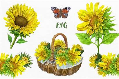 Sunflowers Clipart Sunflower Yellow Flowers Illustrations Thehungryjpeg
