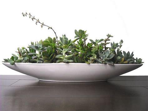 succulent mix  boat shape white ceramic modern