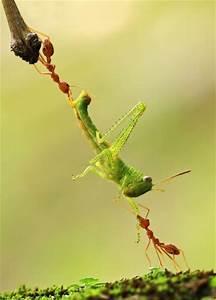 Non Gage Ants : non capisco se stanno collaborando o liticando animals pinterest animal photography ~ Medecine-chirurgie-esthetiques.com Avis de Voitures