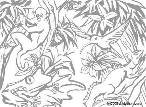 HD wallpapers rainforest coloring pages