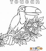 Coloring Toucan Bird Preschoolers Pages Printable Exotic sketch template