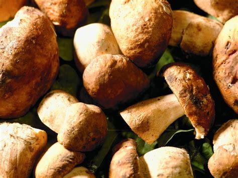 Pilze Garten Züchten by Pilze Selber Z 252 Chten F 252 R Zu Hause Garten Tipps Garten