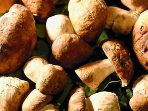 Pilze selber zuchten fur zu hause garten tipps garten for Französischer balkon mit pilze züchten im garten