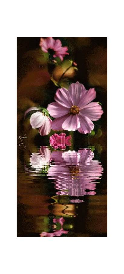 Flowers Flower Photobucket Animated Gifs Garden Keefers