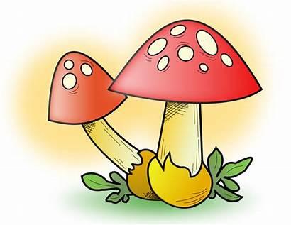 Mushroom Clip Clipart Fungi Decomposer Domain Poison
