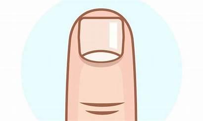 Clipart Nails Finger Fingernails Shape Clip Suggests